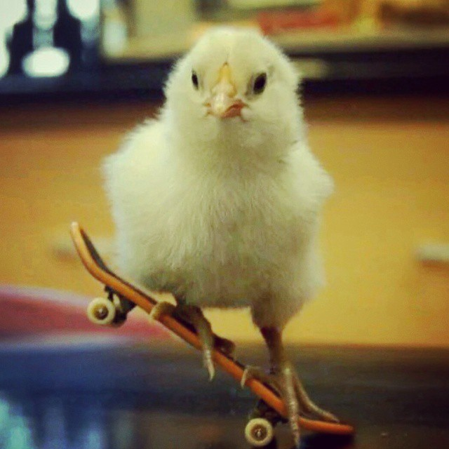 Chicks on Skateboards tho  #skate #funny #skateboard #chicksman #chicks #manual #techdeck #fingerboard #chick #sk8 #skateboard #skateboarding #skateeverydamnday #skateboardingisfun #skatememes #lol #haha #whateverskateboards #whatever