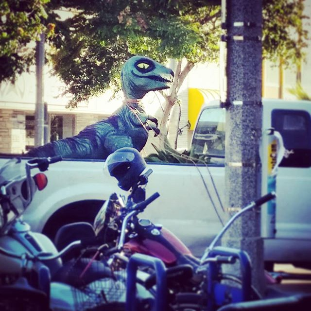 Philosoraptor spotting. Looks like the motorcycle scene in jurassic park caught on, grab ur hogs it's time to ride!  haha #pacificbeach #pblife #pb #sandiego # raptor #philosoraptor #beach #beachlife #bikes #motorcycles #dinosaurs #dinolife #proudraptorowner #raptors #whatever #whateverskateboards