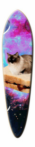 cat meme skateboard